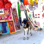 インド旅行|百花百様、自分のインドを探しに。